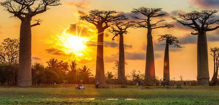 Madagascar, référencement pas cher